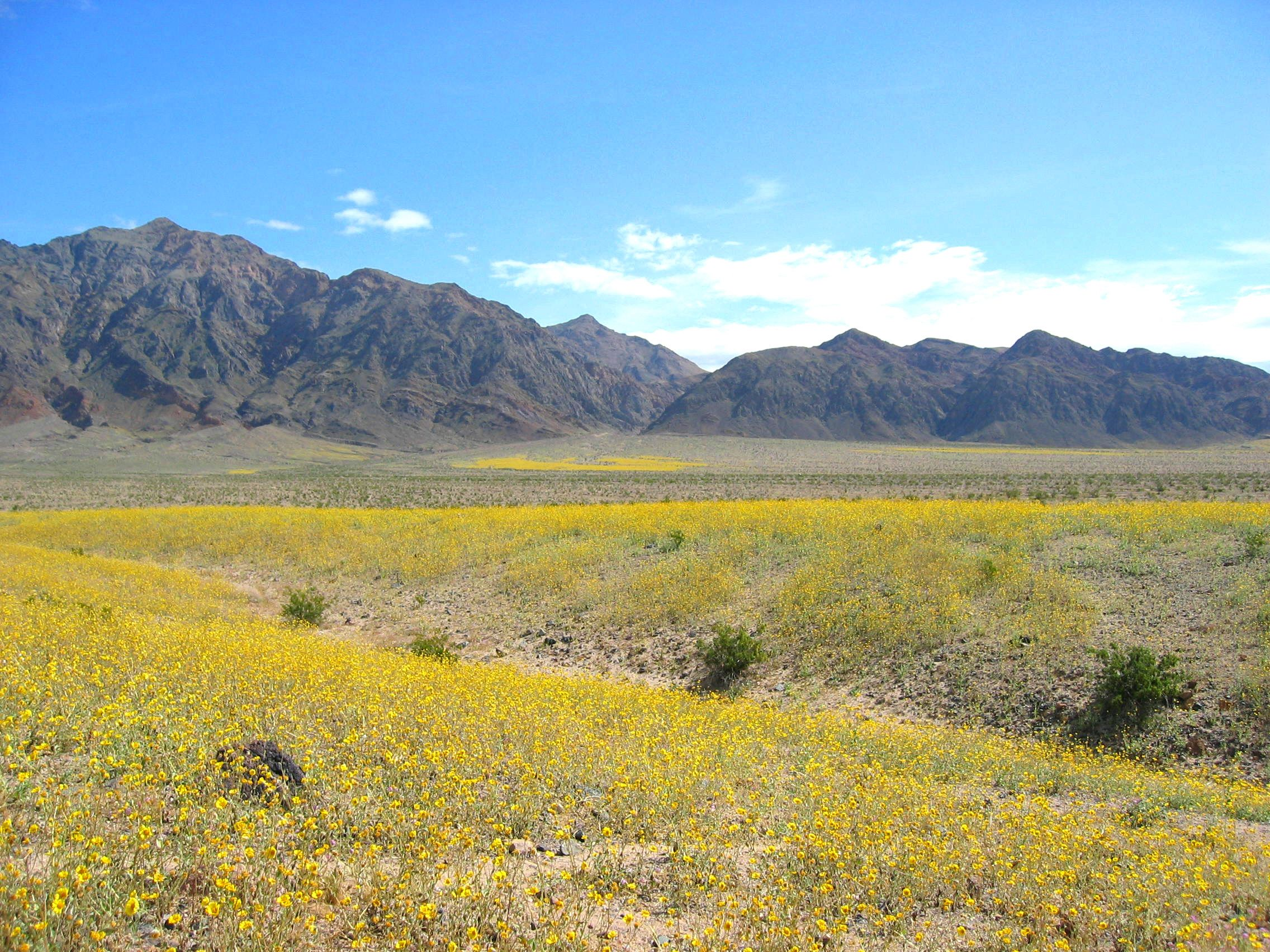 """GoFools All galleries for album """"Death Valley Wildflowers"""""""